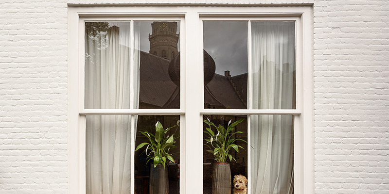 wooden windows with puppy looking out the window