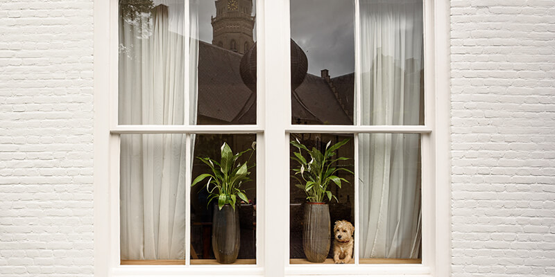 Dog behind modern window